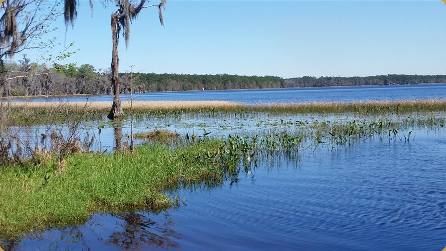 View of Ocean Pond from Hog Pen Campground