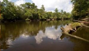 Endisto River