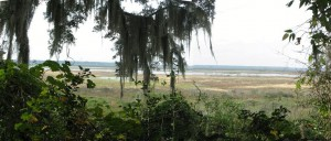 Alachua Lake Overlook