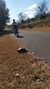 Peggy Biking by a Turtle